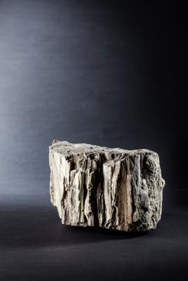 Steinzeit Baumstamm versteinert Jessica Morfis